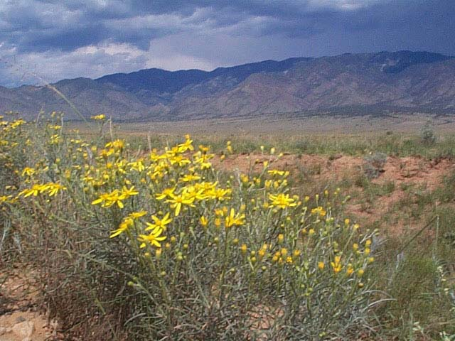 .25 Acre Buildable Parcel Outside Of Albuquerque